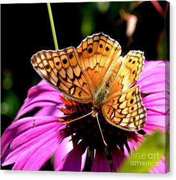 Butterfly On Coneflower-05 Canvas Print by Eva Thomas
