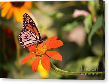 Butterfly On Flower 1 Canvas Print by Artie Wallace