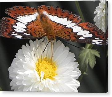 Canvas Print - Butterfly On Flower by Arindam Raha