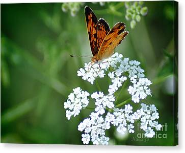 Butterfly On Lacy Wildflower Canvas Print by Nava Thompson