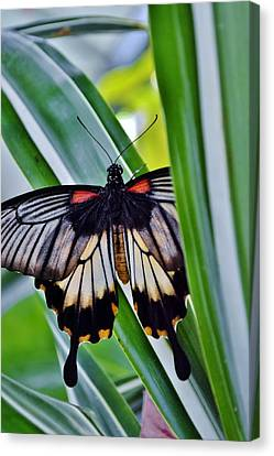 Canvas Print featuring the photograph Butterfly On Leaf by Werner Lehmann