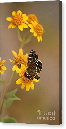 Canvas Print featuring the digital art Butterfly On Marigold by John  Kolenberg