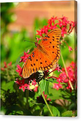 Canvas Print featuring the photograph Butterfly On Pentas by Carla Parris