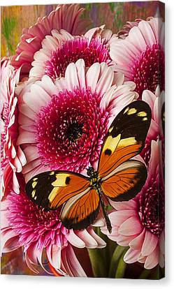 Butterfly On Pink Mum Canvas Print by Garry Gay
