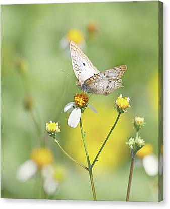 Butterfly On Wildflower Canvas Print