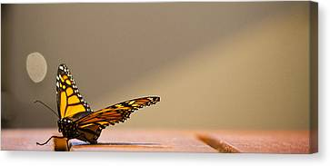 Butterfly Canvas Print by Paul Robb