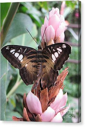 Butterfly Pavilion1 Canvas Print by Michelle H