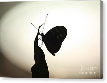 Butterfly Silhouette  Canvas Print by Nishanth Gopinathan