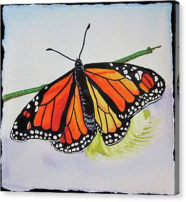 Butterfly Canvas Print by Teresa Beyer