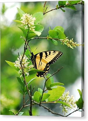 Canvas Print featuring the photograph Butterfly Tiger Swallow by Peggy Franz