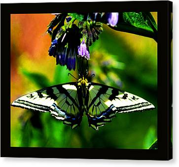 Canvas Print featuring the photograph Butterfly Upside Down On Comfrey Flowers by Susanne Still