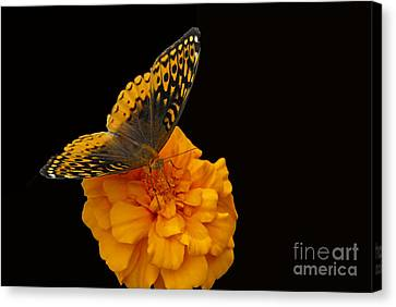 Canvas Print featuring the photograph Butterfly Visitor by Cindy Manero