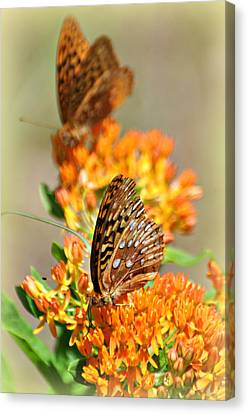 Butterfly Weed 2 Canvas Print by Marty Koch