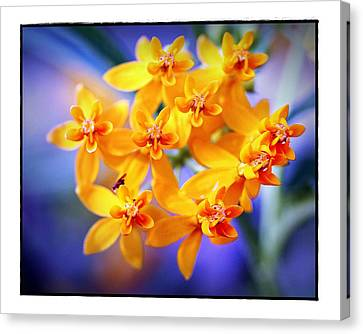 Butterfly Weed Canvas Print by Judi Bagwell