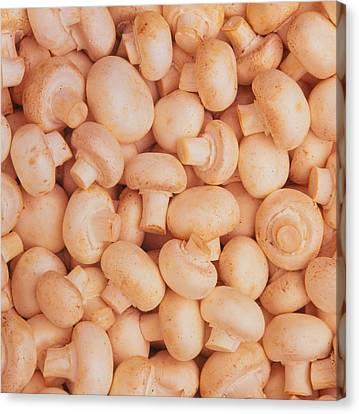 Button Mushrooms Canvas Print - Button Mushrooms by Kaj R. Svensson