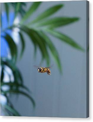 Buzz Of The Hover Fly Canvas Print