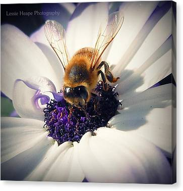 Buzz Wee Bees Lll Canvas Print by Lessie Heape