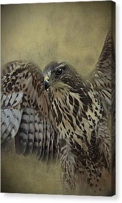 Canvas Print featuring the photograph Buzzard Preparing To Fly by Ethiriel  Photography