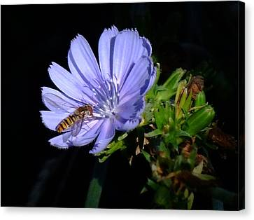 Buzzy In Blue Canvas Print by Alison Richardson-Douglas