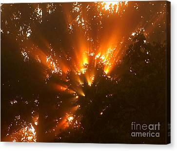 By The Dawns Early Light Canvas Print by Marjorie Imbeau