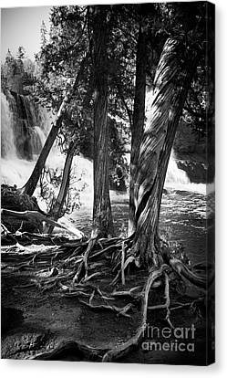 By The Falls Canvas Print by Perry Webster