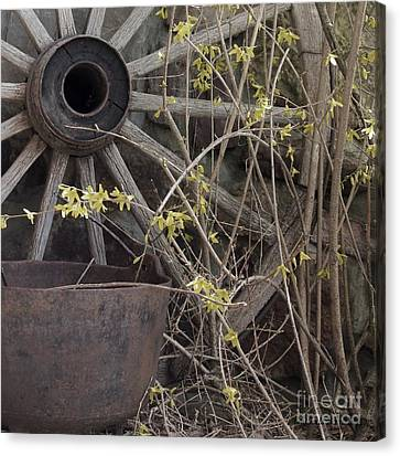 Canvas Print featuring the photograph By The Rock Wall 1 by Laurinda Bowling