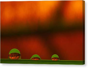 C Ribet Orbscape Three Perceptions Canvas Print by C Ribet