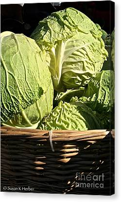 Cabbage Heads Canvas Print by Susan Herber