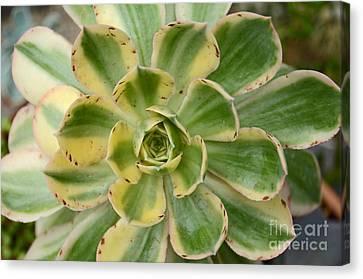 Cactus 63 Canvas Print