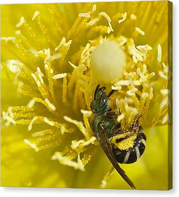 Cactus Flower And Bee Canvas Print