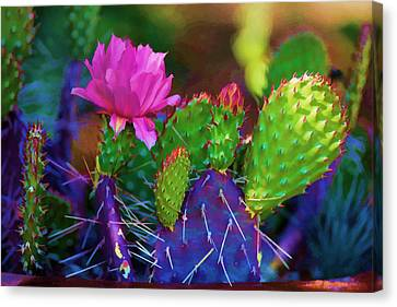 Cactus Flowers In Pink Canvas Print