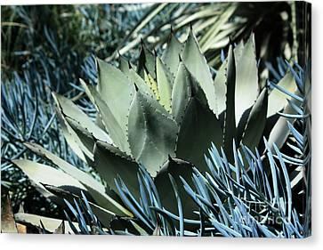 Cactus Canvas Print by Marjorie Imbeau