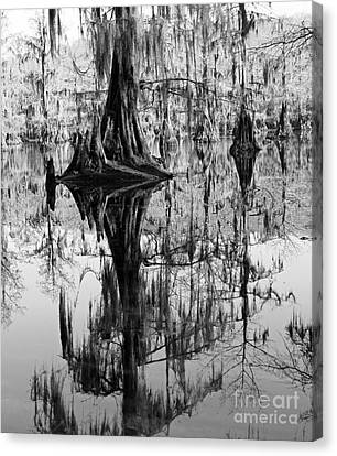 Caddo Lake 4 Canvas Print by Gayle Johnson
