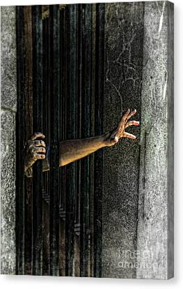 Caged 3 Canvas Print by Jill Battaglia