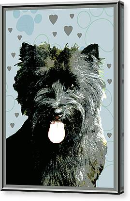 Cairn Terrier Canvas Print by One Rude Dawg Orcutt