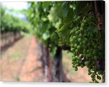 Cakebread Cellers Canvas Print by Ty Helbach