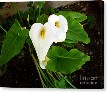 Cala Lily Canvas Print by The Kepharts