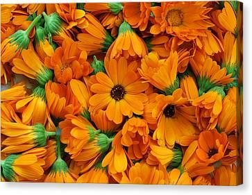 Canvas Print featuring the photograph Calendula Flowers by Aleksandr Volkov