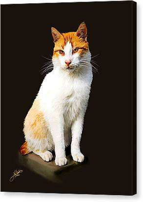 Calico Canvas Print by Tom Schmidt