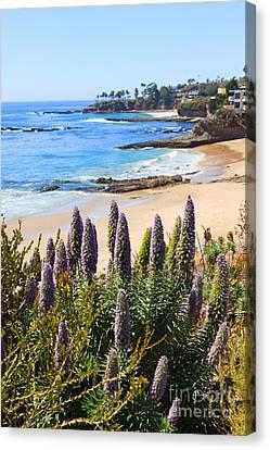 California Coast Flowers Photo Canvas Print by Paul Velgos
