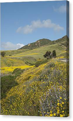 California Hillside View I Canvas Print by Kathleen Grace