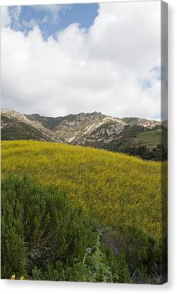 California Hillside View V Canvas Print by Kathleen Grace