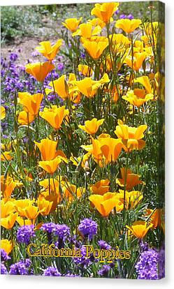 Canvas Print featuring the photograph California Poppies by Carla Parris