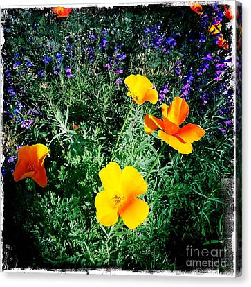 Canvas Print featuring the photograph California Poppy by Nina Prommer