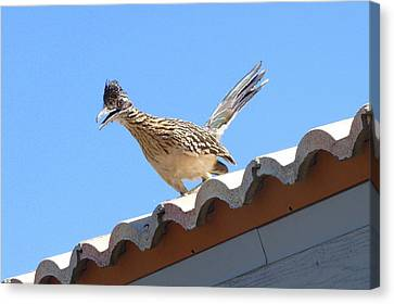 Canvas Print featuring the photograph California Roadrunner by Carla Parris