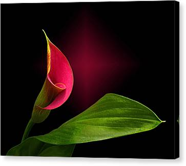 Canvas Print featuring the photograph Calla Lily by Judy  Johnson