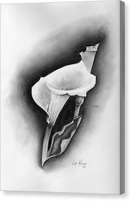 Calla Lily Canvas Print by Lou Knapp