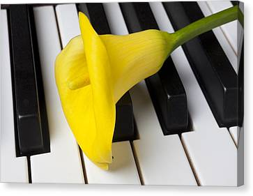 Calla Lily On Keyboard Canvas Print by Garry Gay