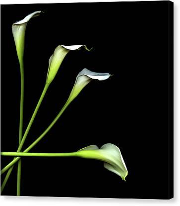 Calla Lily Canvas Print by Photograph by Magda Indigo