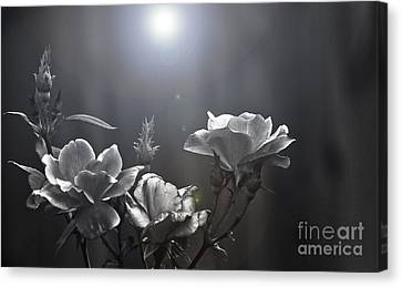 Called Upon Canvas Print by Kim Henderson